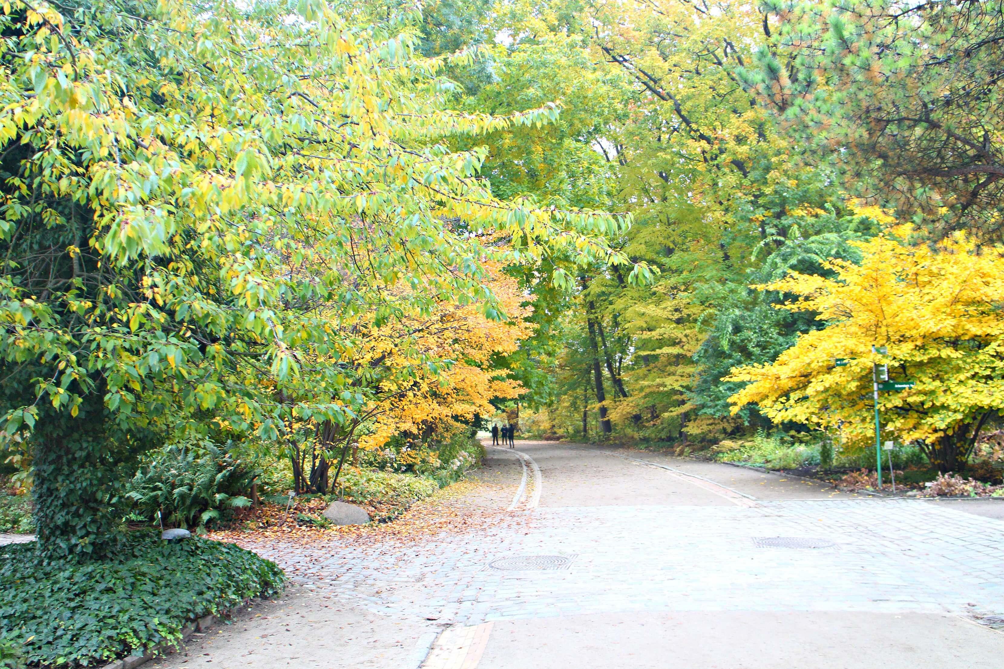 Botanischer Garten Berlijn in de herfst