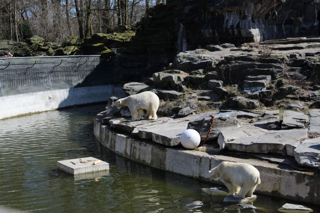 Ijsberen dierentuin Berlijn