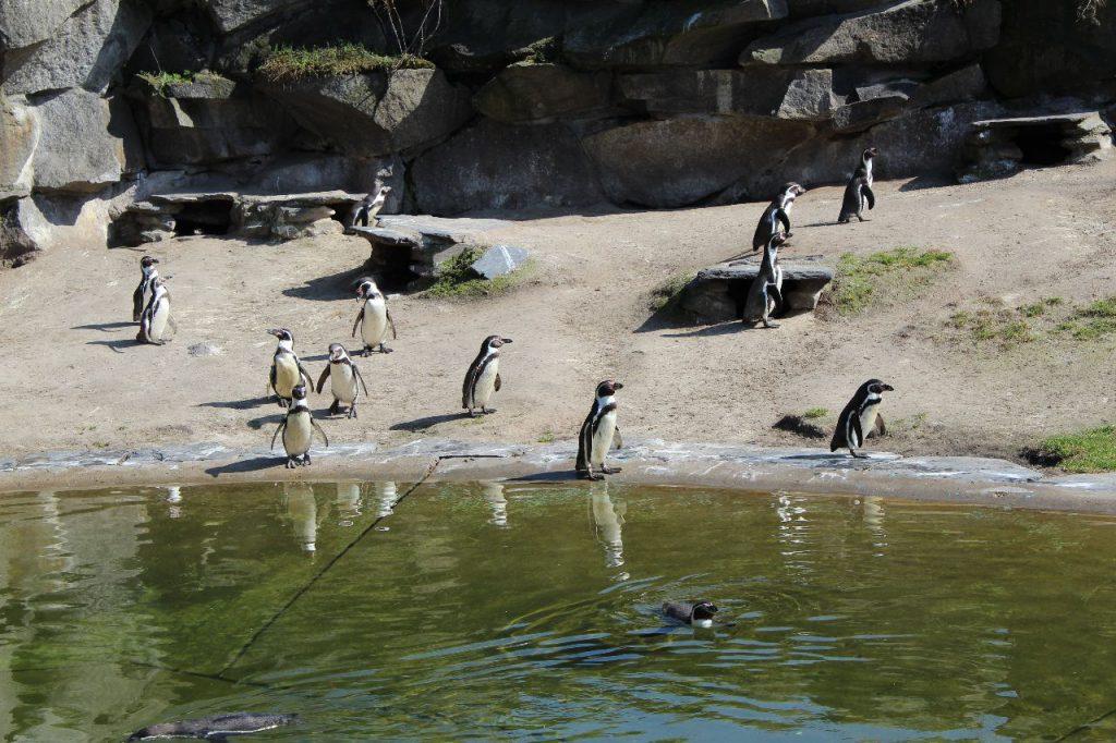 Pinguinverblijf Tierpark Berlin