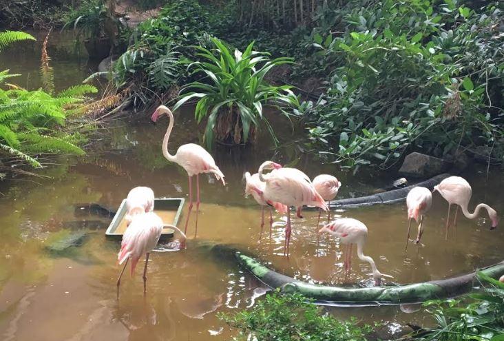Regenwoud Tropical Island